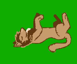 Lion wants a belly rub