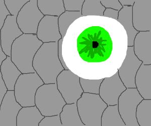 fish's eye