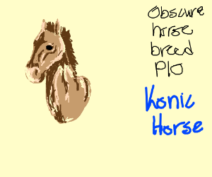 Obscure Horse Breed PIO (Kaimanawa)