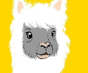 fuzzy alpaca