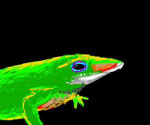 Show me a lizard