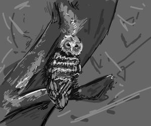 Owl sitting on tree branch