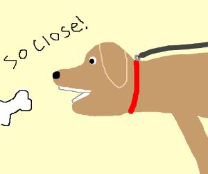 pup bone blocked by his leash