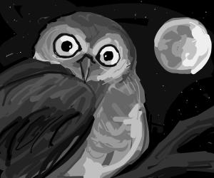An Owl in the Night