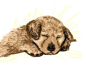 Sleeping Puppo