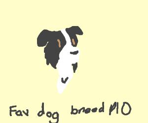 (My favorite is Pug) Favorite dog breed pio