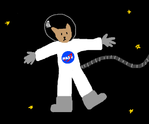 NASA space cat