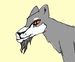 Bearded Wolf