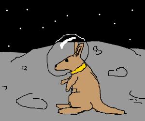 Kangoroo on the moon