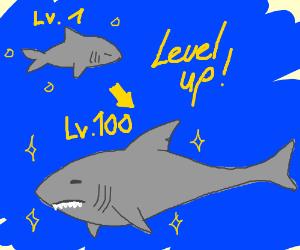 LV1 Shark To LV100 Shark