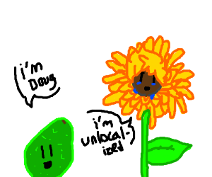 Sunflower and Avocado introduce themselves