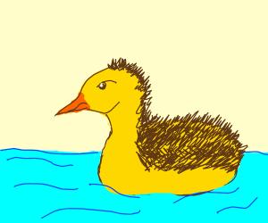 Magnificent hedgehog duck hybrid