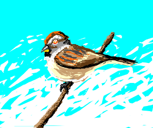 a brown bird with yellow/orange/red eyes.