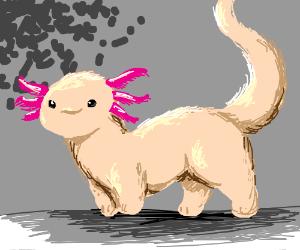 Axolotl-Ferret