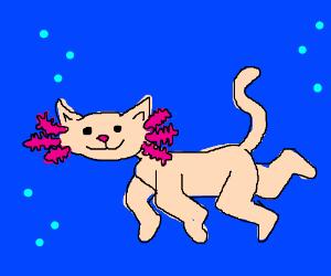 Axolotl cat.