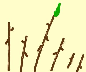 6 sticks, one has a leaf