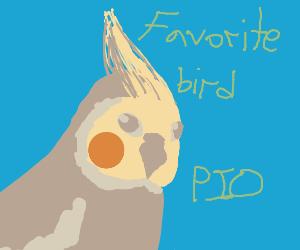 Favorite Bird PIO