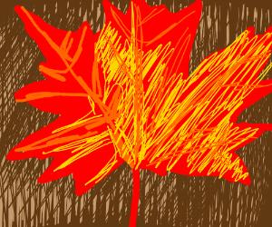 Maple leaf (fall colors)
