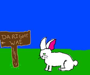 A bunny going da right wae