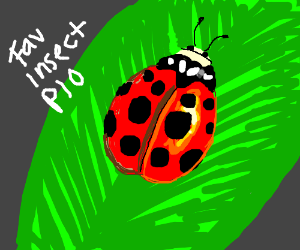 Favorite Insect P.I.O