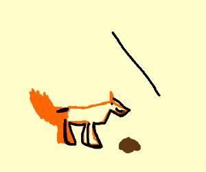 fox eating le poop