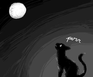 Cat purrs at full moon