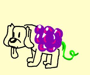 grape dog