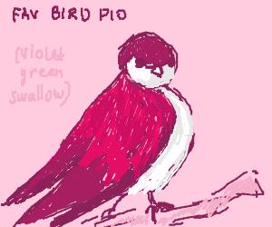 Favorite bird PIO (mine are hummingbirds)