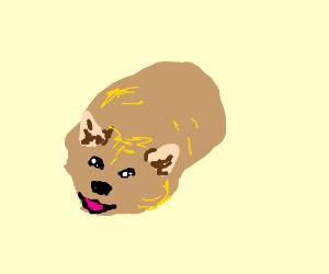 happy dogue