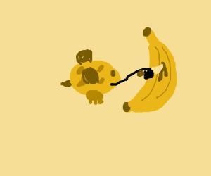 bee-cow murders banana