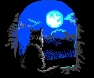 Cat staring at moon