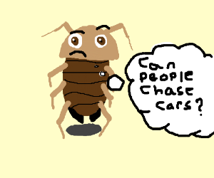 """""""Can people chase cars?"""" the roach wondered."""