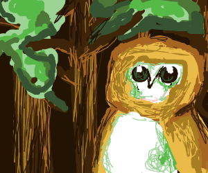 Owl in a forrest