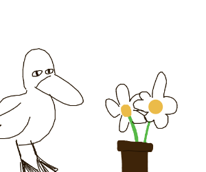 Duck & Flowers