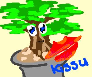 bonsai gets kissu