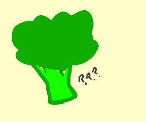 Delicious Broccoli <3