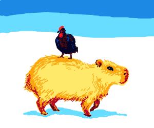 Chicken riding a capybara in the snow