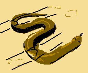 a snake is roadkill