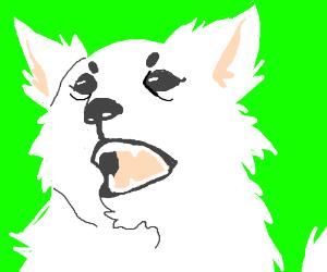 Klondike (Jacksfilms' dog)