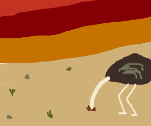 Ostriches head in the sand