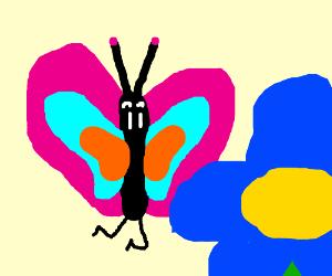 butterfly watching floweeer