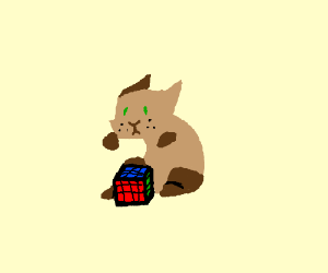 Cat With Solved Rubik S Cube