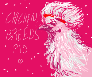 Chicken breeds pio