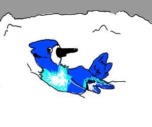 A bird i n the snow