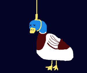 Mallard duck..death by hanging