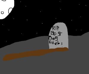 Dog grave yard :(