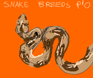 Snake Breeds PIO