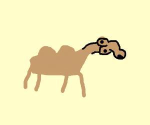 burn the pennnnnnnnis camel