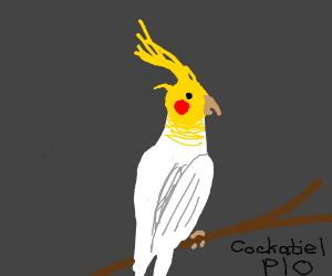 cockatiel pass it on