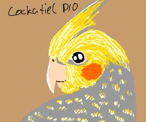 Cockatiel PIO (<3 !!)